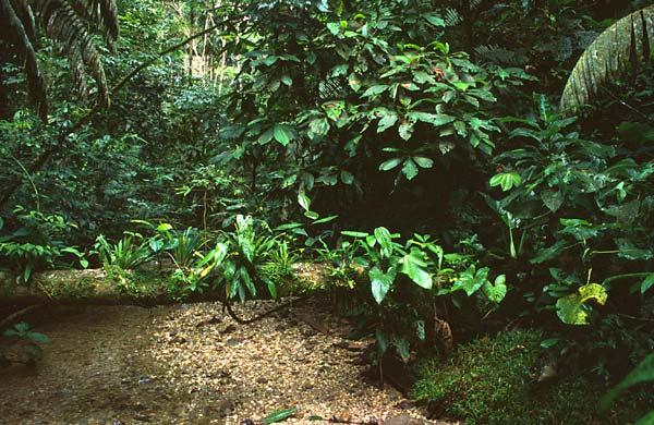 Tropický deštný prales