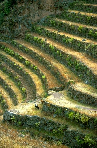 Peru - zemědělské terasy z dob Inků