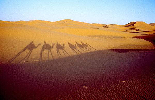 Stín karavany na duně