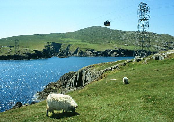 Ovce a lanovka na ostrov Dursey
