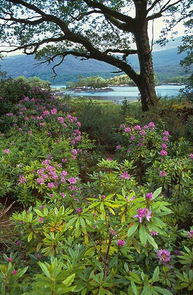 Kvetoucí les u jezera Upper Lake