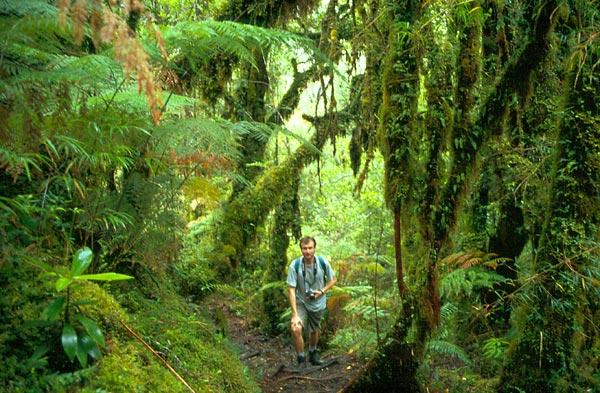 Turista v deštném pralese
