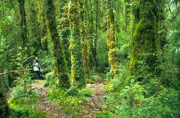 V národním parku Pumalín