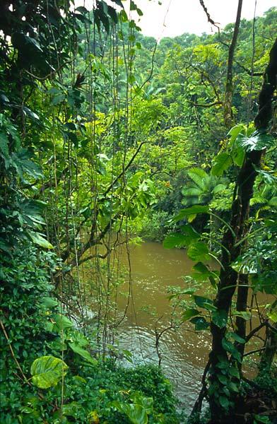 Řeka v tropickém pralese