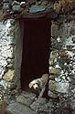 Bílý pes ve dveřích ruiny