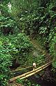 Most v tropickém horském pralese