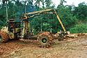Kácení tropických deštných pralesů