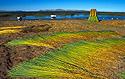 Rákosí totora u jezera Titicaca