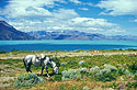 Kůň nad jezerem Lago O'Higgins