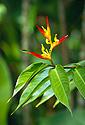 Jemná krása tropického květu