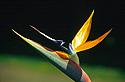 Strelície - pták z ráje