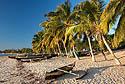 Pirogy pod palmami