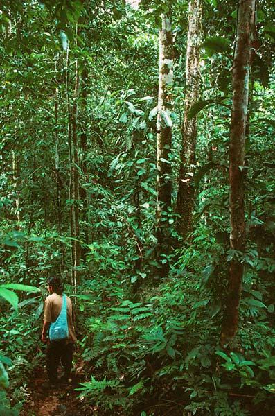 Strážce parku v tropickém pralese