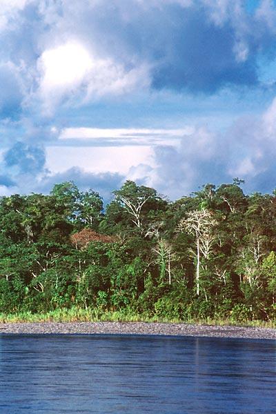 Amazonie - prales na břehu řeky