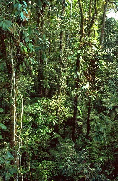 Tropická džungle v Amazonii