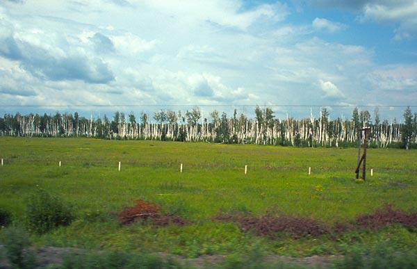 Západosibiřská nížina