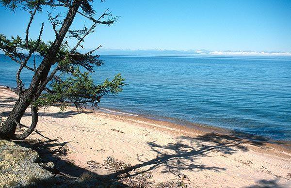 Modřín na břehu Bajkalu