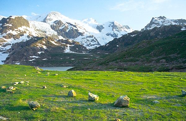Jarní travička nedaleko ledovce Steingletscher