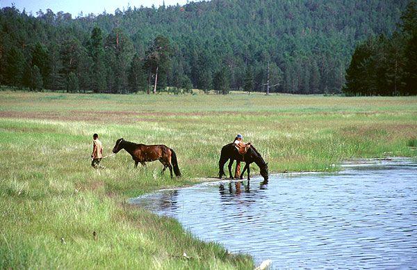 Koně pijí vodu z jezera Šara-Nur