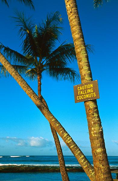 Pozor padají kokosy