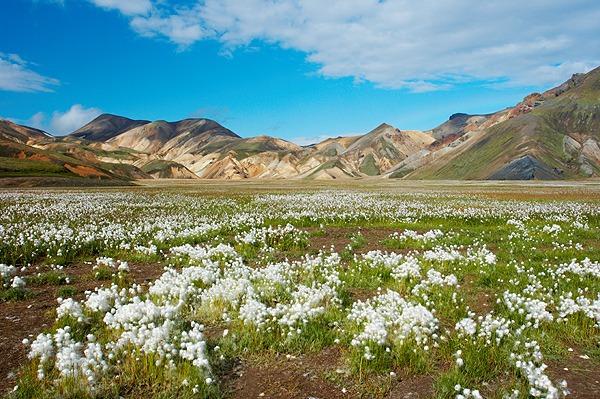 Kvetoucí louka v údolí Vondugil