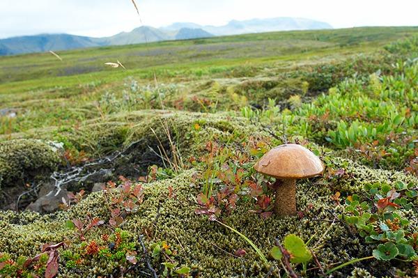 Národní park Skaftafell je na houby
