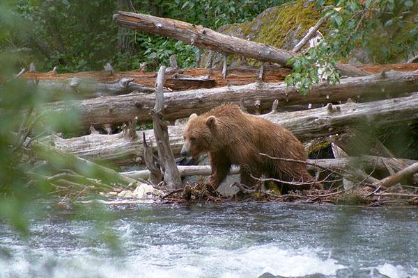 Medvědice u řeky