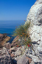 Vápencové skály na jižním pobřeží Krymu