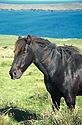 Kůň na pastvině nad mořem