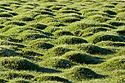 Zelené travnaté kopečky