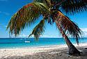 Palma u azurového moře